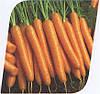 Морковь Карведжо F1 200 000 сем. Seminis.