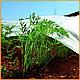 Агроволокно пакетоване 30 г/м2 біле 3.2х10 метрів, фото 8