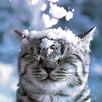 Обработка заказов задерживается из-за снегопада