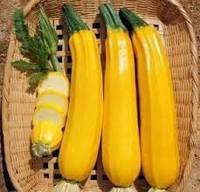 Семена кабачка раннеспелого желтого Елоу Хаус F1, NongWoo Bio (Корея), 500 семян