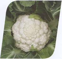 Семена капусты Фридом F1 2500 сем. Seminis.