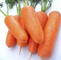 Семена моркови Чикаго F1, Wing Seed (Нидерланды), 200 000 (1.6-1.8 мм) семян