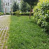 Альпийский луг- Газон с цветами цветущий низкорослый газон для сада для ленивых, фото 4