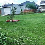 """Альпійська галявина - Газон БЕЗ ПРОБЛЕМ трава газонна """"для ледачих"""" з квітами квітучий газон прикраси для саду, фото 3"""