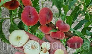 """Персик инжирный""""Свит Ринг(урожайный,вкусный)2х летка, фото 2"""