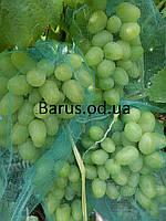 Сетка для защиты винограда от ос и птиц грона до 5 кг