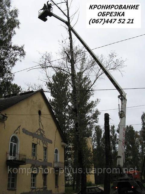 Кронирование  деревьв Киев Обрезка веток Удаление деревьев, спил, вырубка Удаление пней