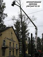 Кронирование  деревьв Киев Обрезка веток Удаление деревьев, спил, вырубка Удаление пней, фото 1