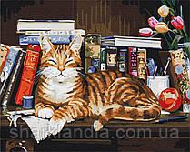 Картина по номерам Кот на книжной полке 40*50см Brushme Раскраски