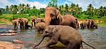 """Экскурсионный тур в Шри-Ланку """"Природа и история (CULTURE & NATURE)"""" на 4 ночи / 5 дней, фото 3"""