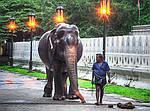 """Экскурсионный тур в Шри-Ланку  """"Достопримечательности (HIGHLIGHTS of SRI LANKA)"""" на 3 ночи / 4 дня, фото 3"""