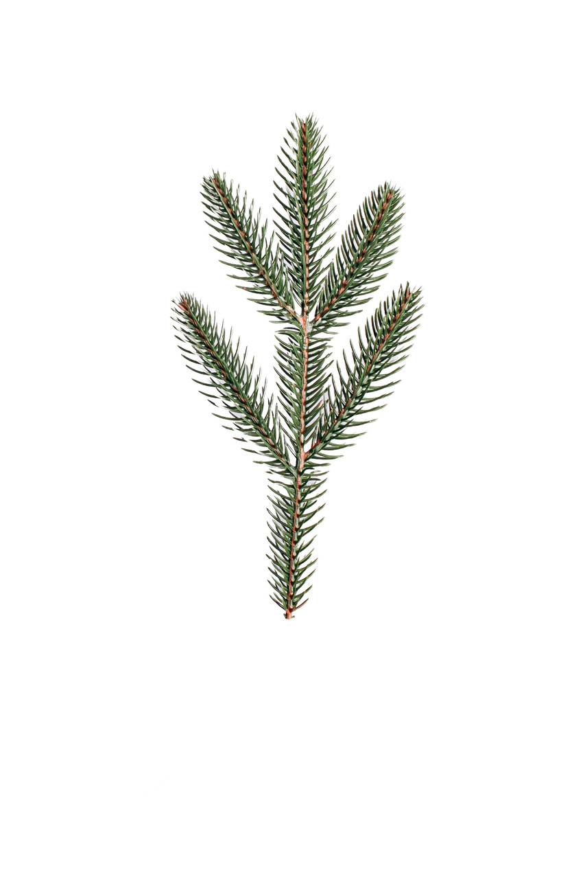 Гілка зелена №11 (1 ящик 400 шт.)