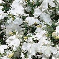 Семена Лобелия кустовая Ривьера Белая  200 мультидраже Pan American
