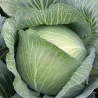 Семена Капуста белокочанная Центурион F1 20 сем. Clause, Хранение до 5 месяцев., фото 1