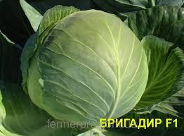 Семена Капуста белокочанная Бригадир F1 20 сем. Clause, Хранение до 5 месяцев.