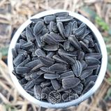 Семена подсолнечника под гранстар NS 6059 Сумо 007 ( Оптимум ) Евросем,, фото 3