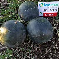 Семена арбуза INX 1748 F1 1000шт. Innova Seeds
