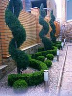Топиарные формы в озеленении.