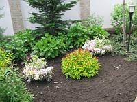 Растения для ландшафтного дизайна. Озеленение.