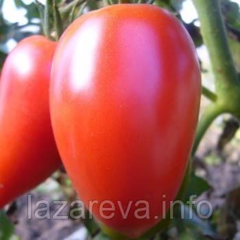 """Насіння томату """"від Лазарєвих"""" Малиновий перцевидний 15 насінин"""