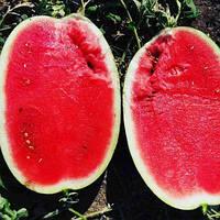 Семена арбуза Монро INX 1723 F1 1000шт. Innova Seeds