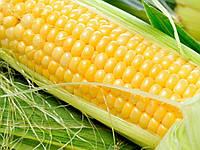 "Кукуруза ""Деликатесная""(семена)"