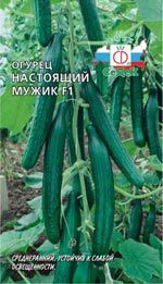 Семена Огурец Настоящий мужик F1,  0,2 грамма Седек - Агроплюс2000 в Харькове