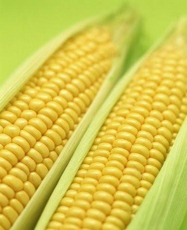 Украина сможет экспортировать в ЕС кукурузу