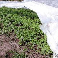 Агроволокно Plant - Protex П- 30 (1,6мх100м)