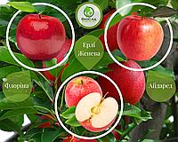 Дерево-сад Айдаред + Флорина + Женева Эрли (1 саженец, 3 прививки), фото 1