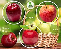 Дерево-сад Флорина + Лигол + Вильямс Прайд (1 саженец, 3 прививки)