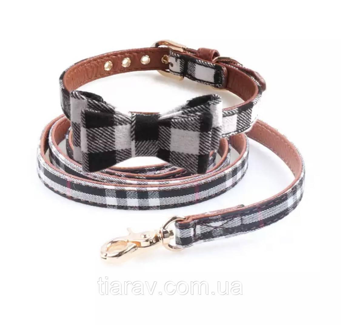 Ошейник кожаный с поводком, набор аксессуаров для собак