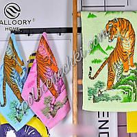 Махровое кухонное полотенце 30×65 Тигр (12)