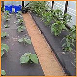 Агроволокно пакетоване 60 г/м2 чорне 1,6х10 метрів, фото 4