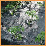 Агроткань  черная 100 г/м² , 1,7 х 25 м., фото 5