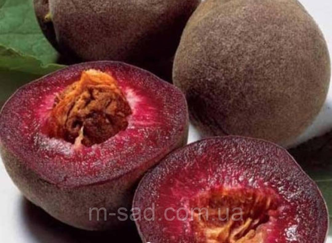 Саджанці Персика Ерітрокарпа (морозостойкій.урожайний, смачний)