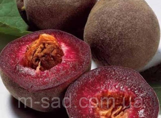 Саджанці Персика Ерітрокарпа (морозостойкій.урожайний, смачний), фото 2