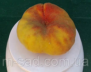 Саджанці інжировим Персика Світ багелі (Новинка) пізній, фото 2