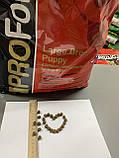 PROFormance Large Breed Puppy (Проформанс Лардж Брід Паппі) сухий корм для цуценят великих порід собак, фото 2