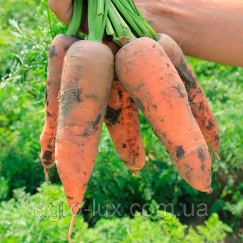 Семена моркови Танжерина F1 к.1,8 100 000 шт
