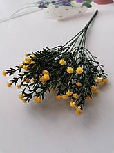 Гілка морошка, жовта квітка