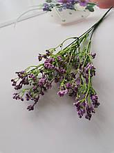 Гипсофил фіолетовий