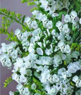 Лімоніум білий однорічник (імп.), фото 2
