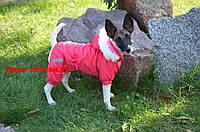 Комбинезон для собаки Сильвер на флисе ск2
