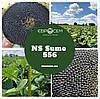 Семена подсолнечника Сумо Ново (Евросем) Под Гранстар