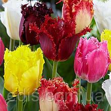 Колекція бахромчатих тюльпанів 10 сортів 20 цибулин/уп.