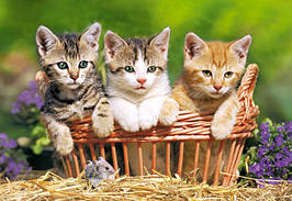 Пазлы Castorland 51168 Котята