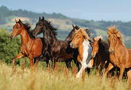 Пазлы 1000 элементов Castorland 101993 Стадо лошадей