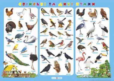 Плакат 70*50 Свійські та дикі птахи