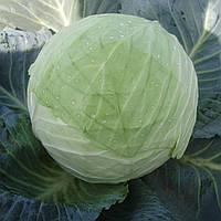 КУБОК F1  - семена капусты белокочанной 2 500 семян, CLAUSE